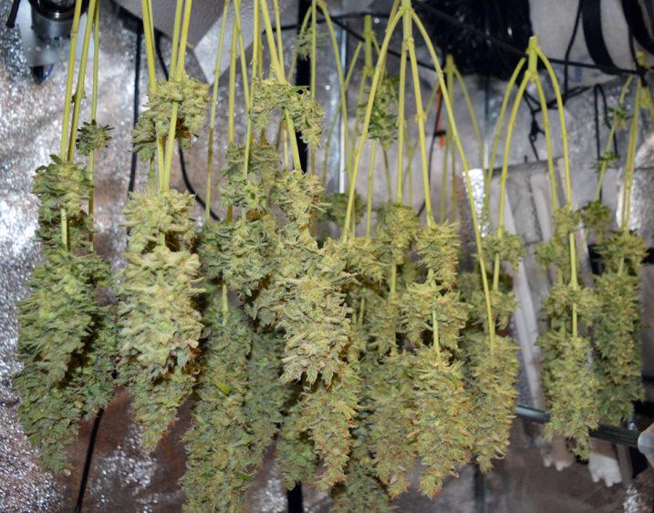 Wire Plant Hangers Diy